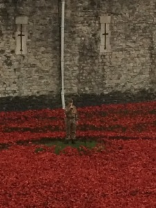 lost post in poppies
