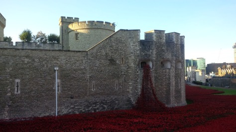 Poppies at Tower 5 Oct.